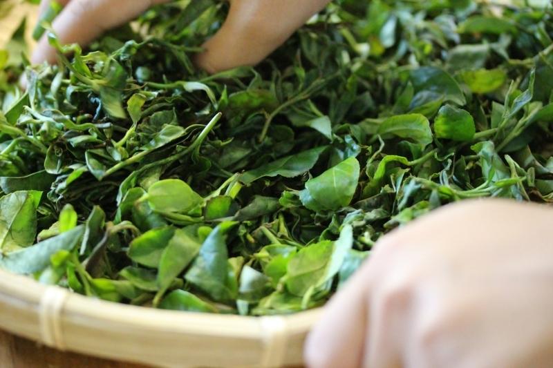 作手にて紅茶作り体験_b0220318_11315433.jpg