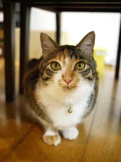 猫のお留守番 ゆきちゃんゆめくんあられくん編。_a0143140_22271887.jpg