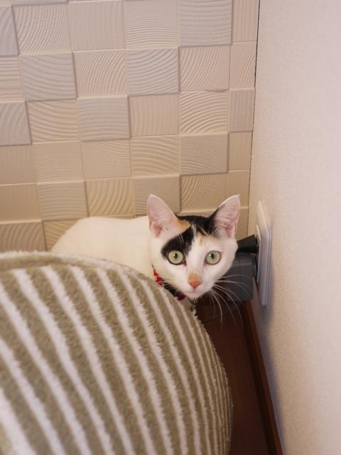 猫のお留守番 サクラちゃんユリちゃん編。_a0143140_2232508.jpg