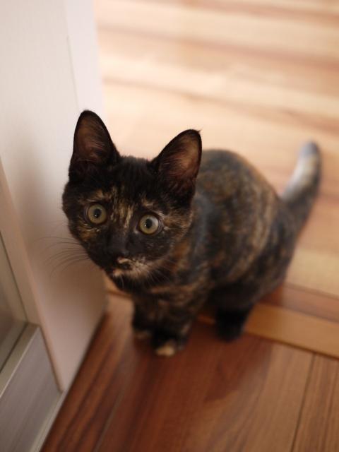 猫のお留守番 サクラちゃんユリちゃん編。_a0143140_22332490.jpg