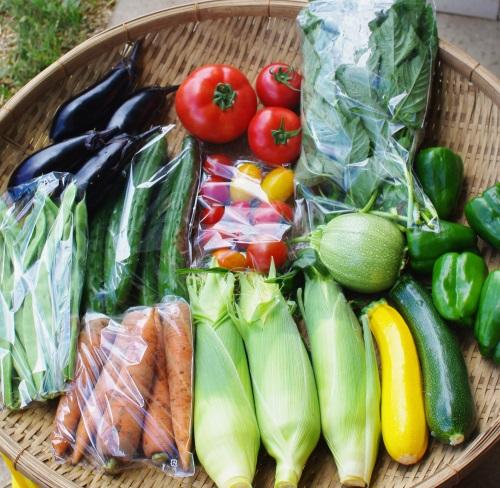 今週の野菜セット(8/2~8/6着)_c0110869_1365413.jpg