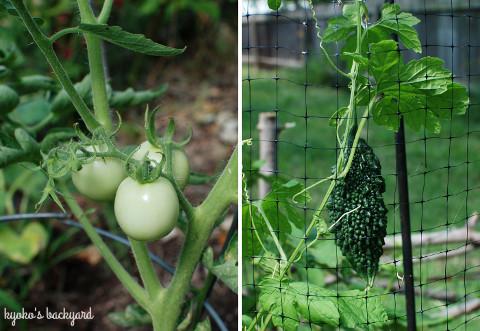 花壇と菜園の様子(7月)_b0253205_03030198.jpg
