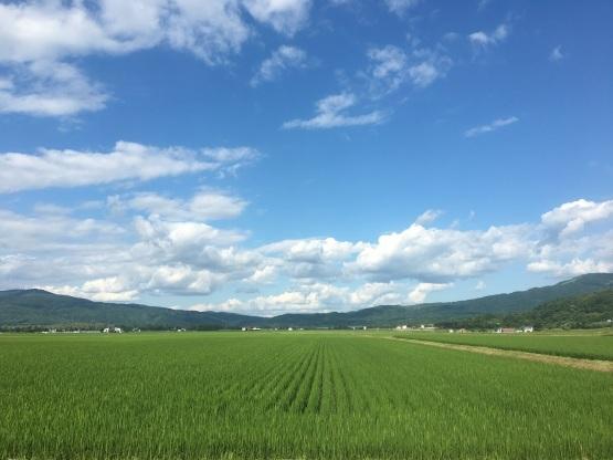 北海道も暑い!気温の問題じゃない!?_a0356060_14131485.jpg