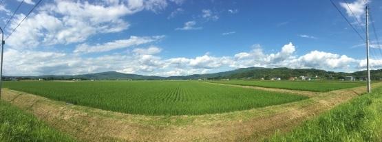 北海道も暑い!気温の問題じゃない!?_a0356060_14132399.jpg