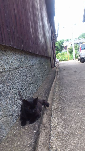 佐久島の猫_c0013065_2214168.jpg