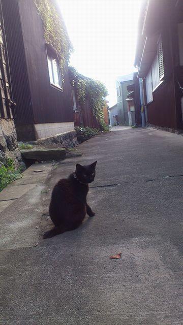 佐久島の猫_c0013065_2214434.jpg