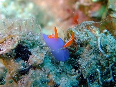 「可愛い幼魚があちこちに!!」_b0033573_17453272.jpg
