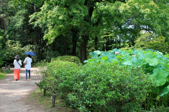 夏の植物園2_e0048413_20191331.jpg