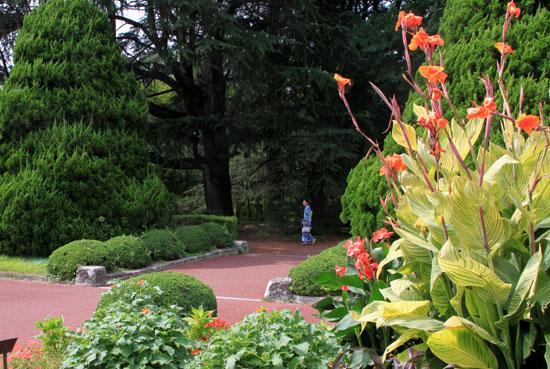 夏の植物園2_e0048413_20193493.jpg