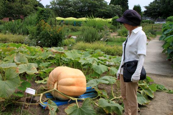 夏の植物園2_e0048413_20201091.jpg