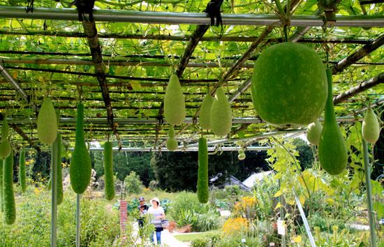 夏の植物園2_e0048413_20202543.jpg