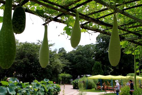 夏の植物園2_e0048413_20203620.jpg