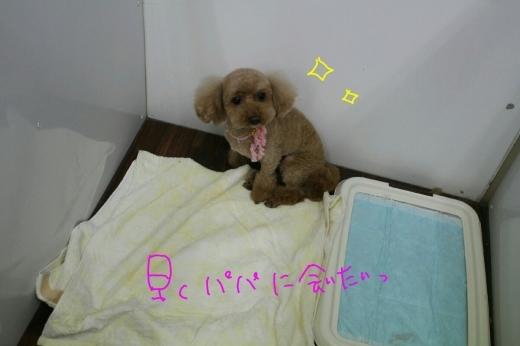 b0130018_02292112.jpg