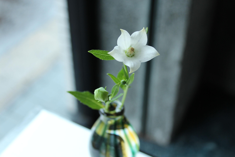 ガラスに花を!_c0237627_7495233.jpg