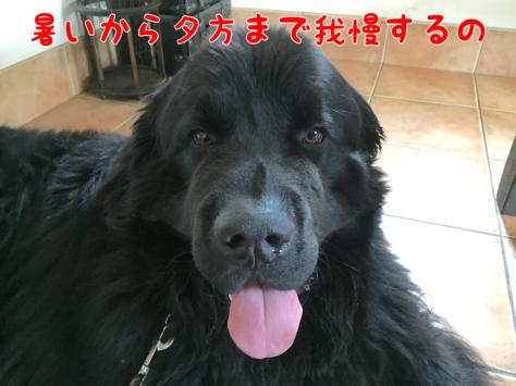 c0343364_16393640.jpg