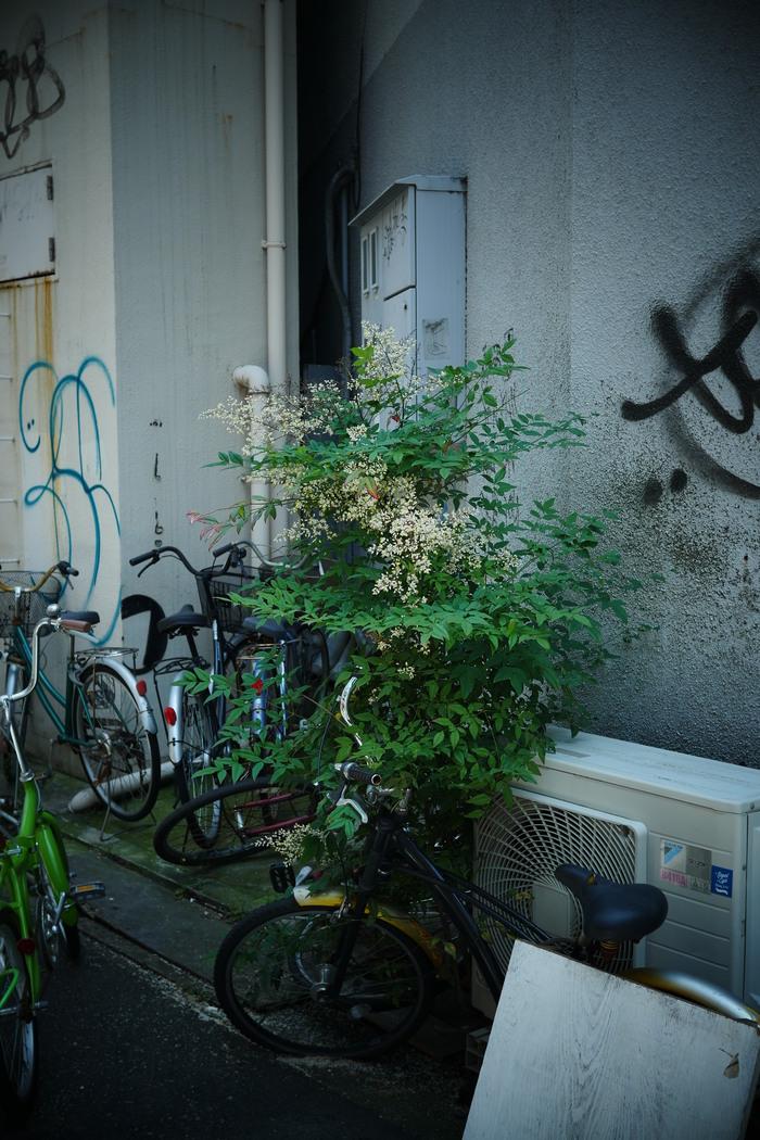 神戸  スナップ _f0021869_2024574.jpg