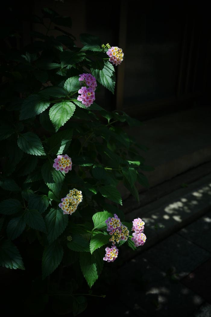 神戸  スナップ _f0021869_20265399.jpg