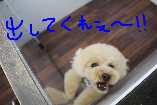b0130018_7122192.jpg