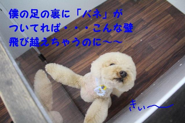 b0130018_7122947.jpg
