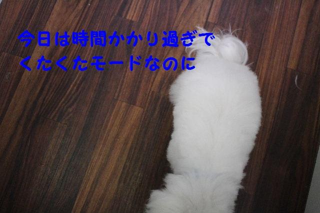 b0130018_79244.jpg