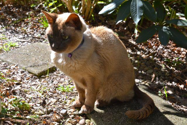 17歳の老猫_f0155522_16433178.jpg