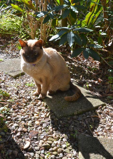 17歳の老猫_f0155522_16433369.jpg