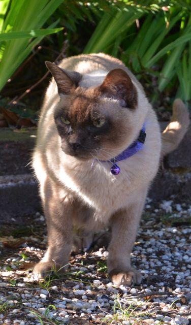 17歳の老猫_f0155522_16433687.jpg