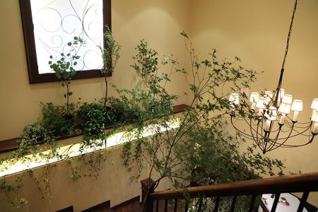夏の装花 ザ・ハウス白金様へ レセプションパーティに_a0042928_11175646.jpg