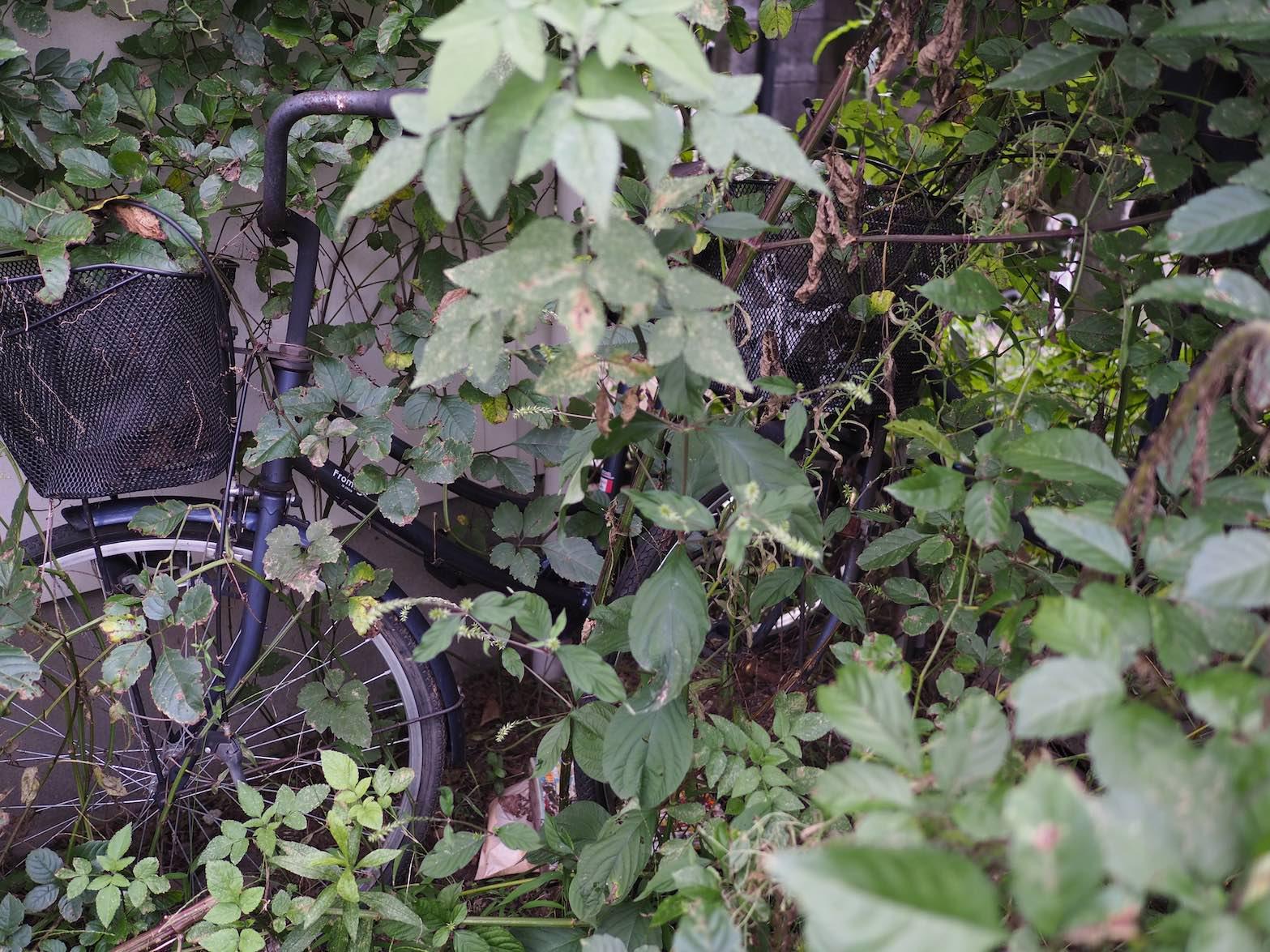 立川周辺スナップ その19_b0360240_2010222.jpg