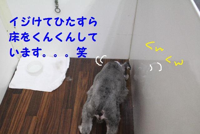 b0130018_6422031.jpg