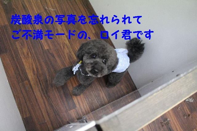 b0130018_6451193.jpg