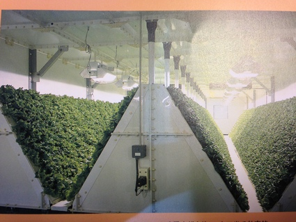 『 キューピー植物工場 (白河市) 』_f0259324_20555276.jpg