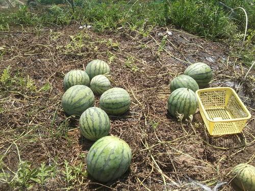 お~大収穫祭です。_b0137932_14542779.jpg