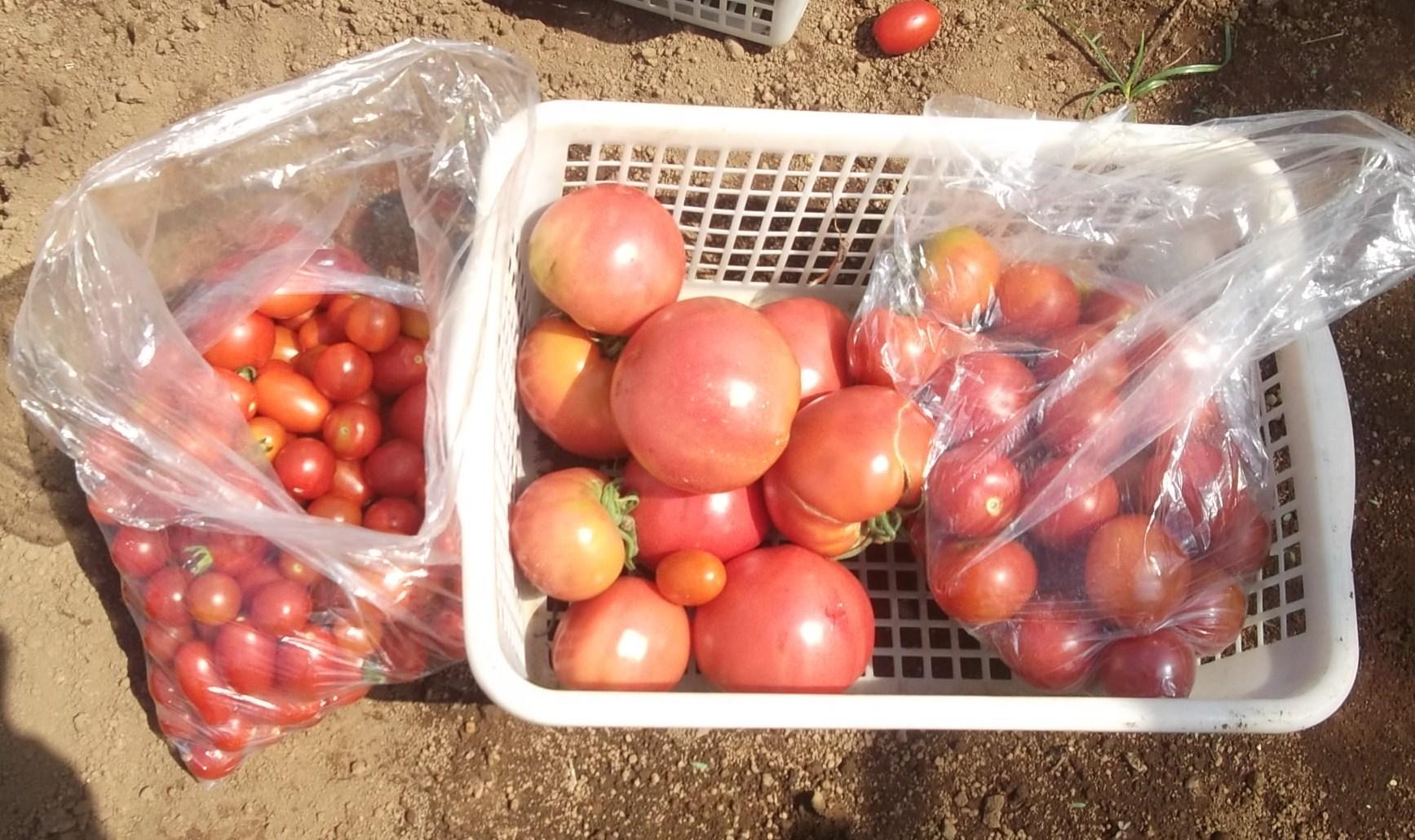 お~大収穫祭です。_b0137932_1505181.jpg