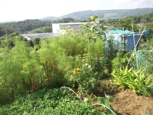 野菜の収穫_b0137932_1857992.jpg