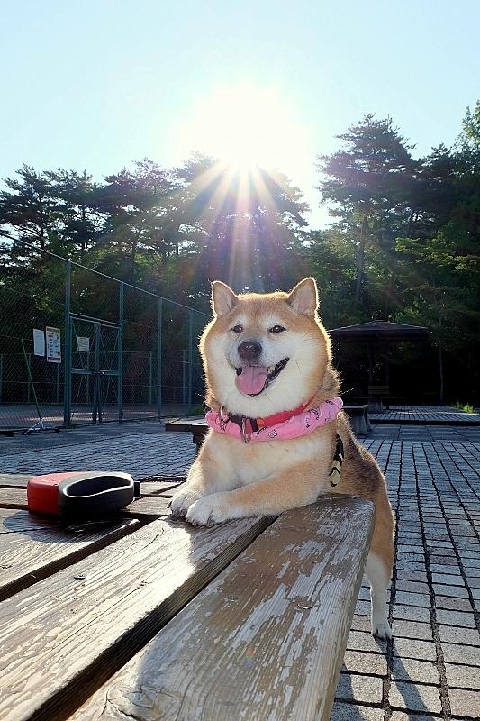 夏のお嬢さん_b0314043_08032637.jpg