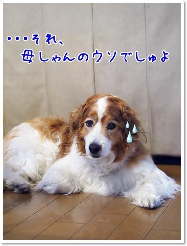 d0013149_00173812.jpg