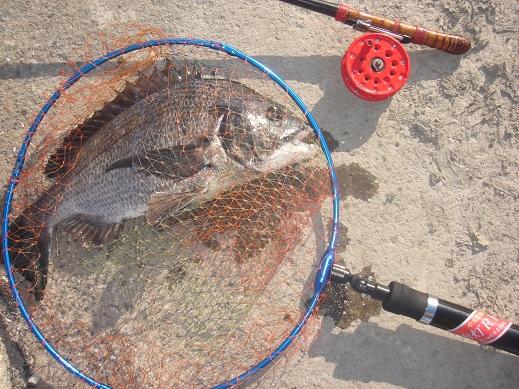 ★黒鯛50㎝年無し釣れたぁー地続き釣行★_e0147297_23354220.jpg