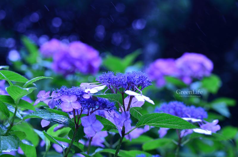 梅雨も明けたというのに_f0321522_11034750.jpg