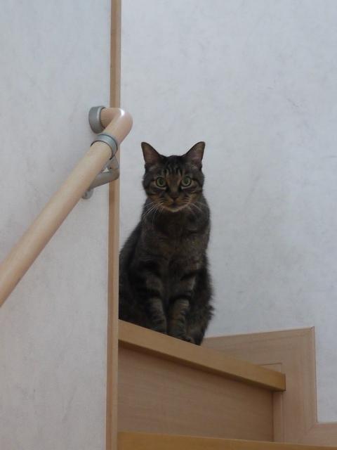 猫のお留守番 リーくん編。_a0143140_21384317.jpg