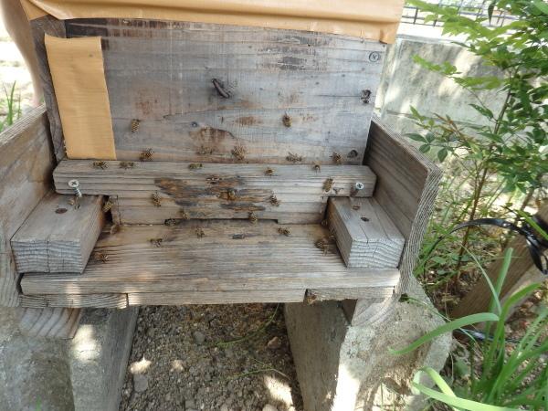 熊本の日本ミツバチを飼っている方を訪問しました。_f0337554_15574951.jpg