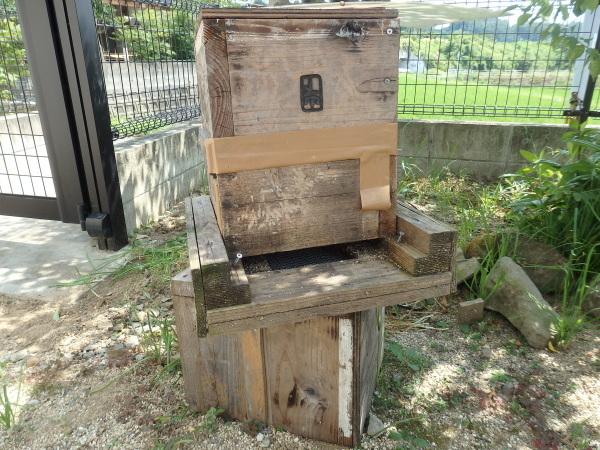熊本の日本ミツバチを飼っている方を訪問しました。_f0337554_16085557.jpg