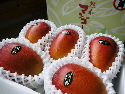完熟アップルマンゴー 平成28年度販売中止のご案内とお詫び_a0254656_16193019.jpg