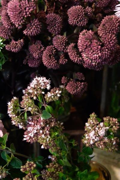 里山の花・ヤマホロシ。。。_a0229658_831892.jpg