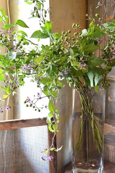 里山の花・ヤマホロシ。。。_a0229658_838931.jpg