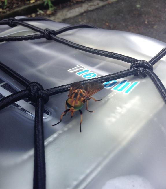 ハチ、蜂、ハニービー_d0164691_2042989.jpg