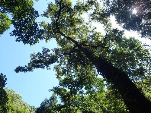 炎天下の採集木開拓_a0315918_16084466.jpg