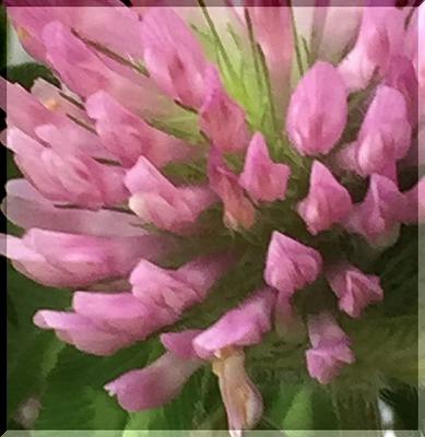 可憐な花・・・・。_e0054438_11534376.jpg