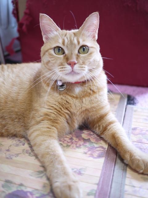 猫のお留守番 マリエちゃんメイちゃん編。_a0143140_19343243.jpg