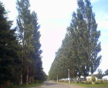 サクシュコトニ川緑地の夏_f0078286_1543985.jpg